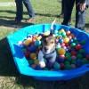 Hundeerziehung von Kleinauf: Spiel & Spaß in der Welpengruppe