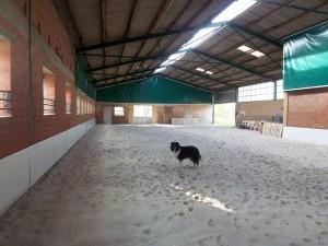 Trainingshalle der Hundeschule Greven von innen