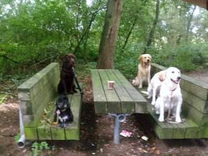 Spiel & Spaß in der Hundeschule Greven